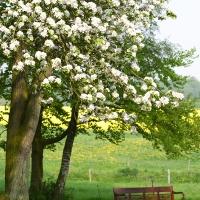 Gartenpflege_1